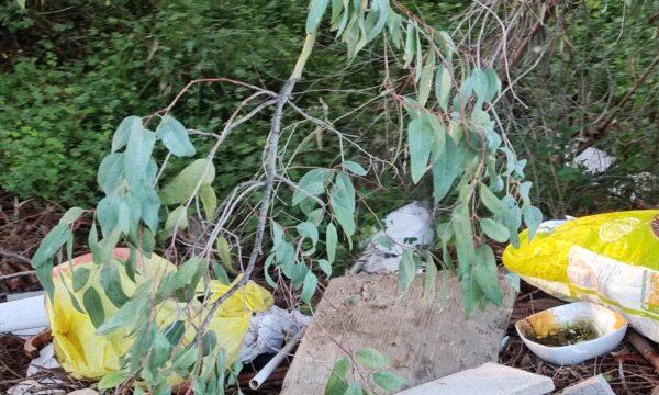 VIALE SPERANZA-S.Spirito,una strada di rifiuti e sterpaglie